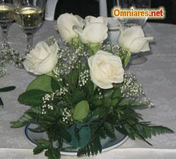 semplici rose bianche